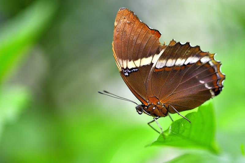 Lady butterfly di Matteo Faliero