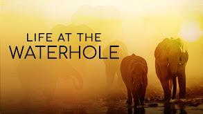 Life at the Waterhole thumbnail