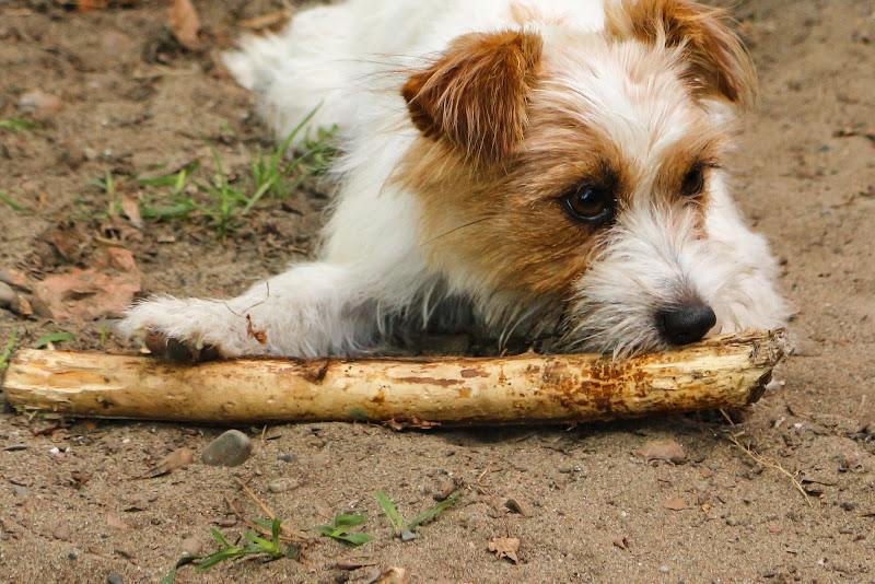 Cane con bastone di Filippo Ceragioli