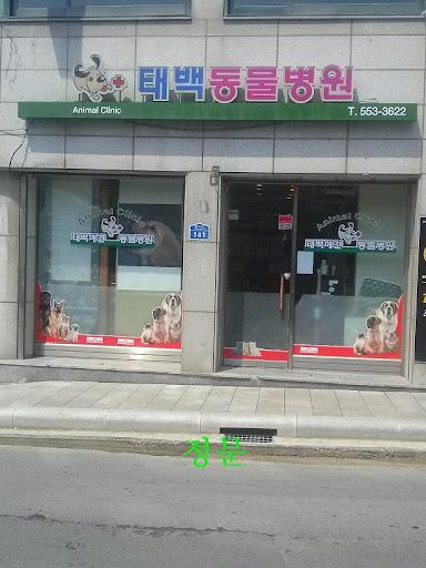 태백 애견 동물병원