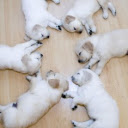 Cute Dogs & Puppies 2020 Custom New Tab