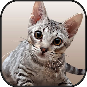Cat Kitten 3d Online Simulator for PC and MAC