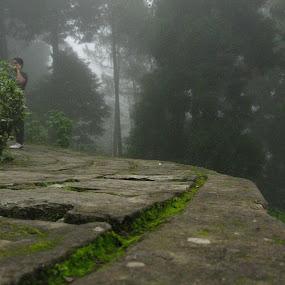 The way by Hrijul Dey - Landscapes Forests ( foggy, rocks, pine, road, algae, way )