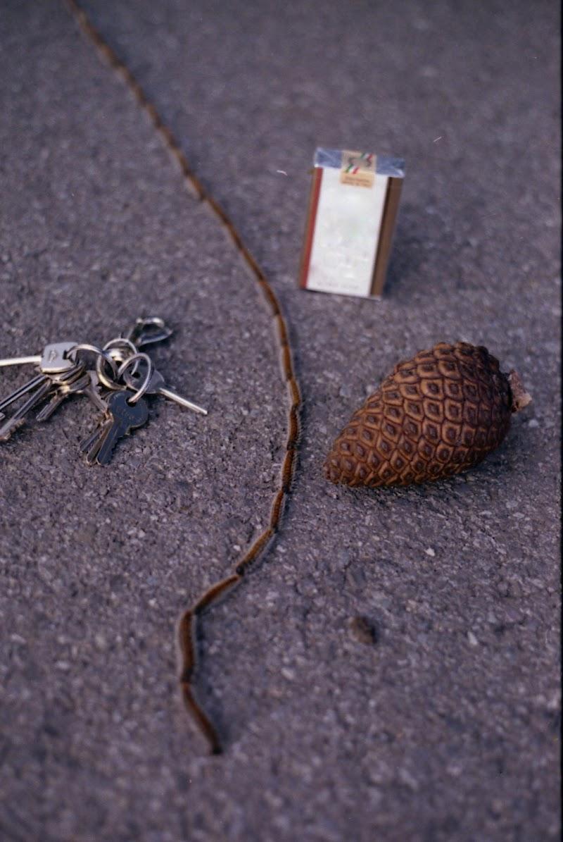 le rughe dei pini di rob