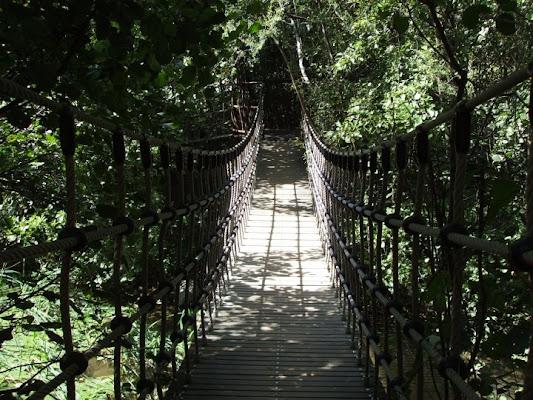 ponte di corde di umberto750