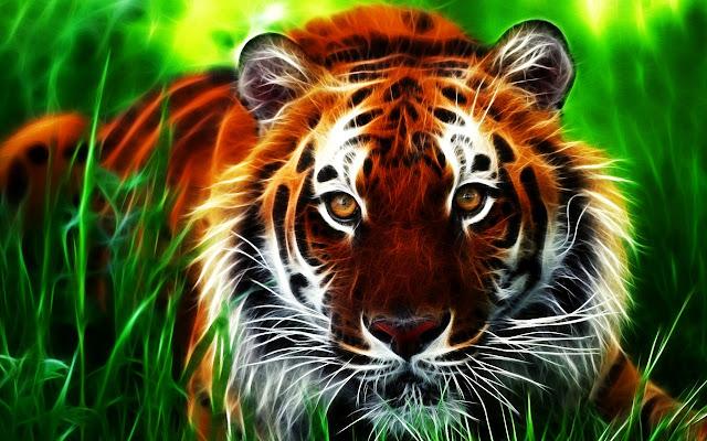 Tigers Tab