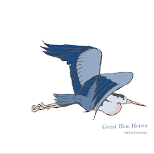 Photo: Great Blue Heron study