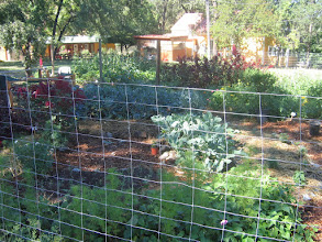 Photo: Yoga Farm, CA - permaculture garden