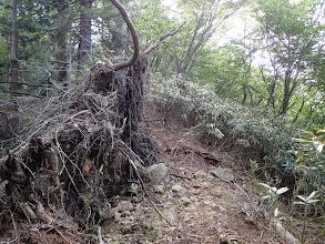 倒木が多く見られる