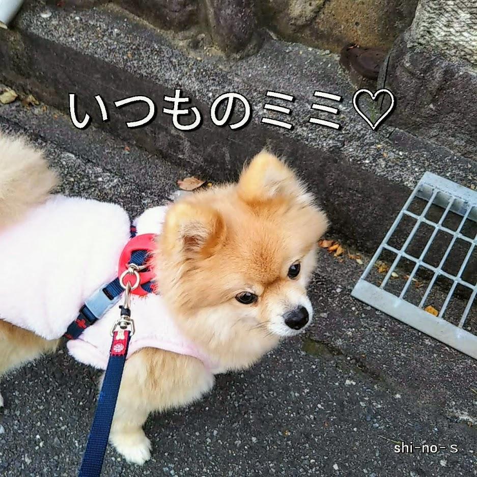 散歩中の愛犬