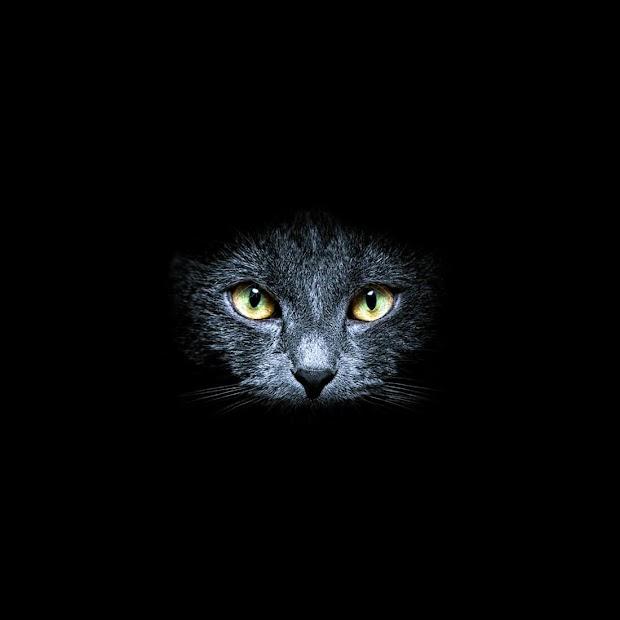 Black Cats Live Wallpaper Android App Screenshot