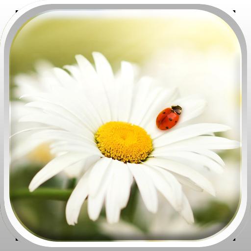 春天 花卉 背景 3D-手机软件下载 HD 個人化 App LOGO-硬是要APP