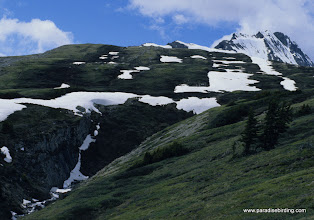 Photo: Wilcox Pass, home of the Timberline Sparrow, Jasper National Park