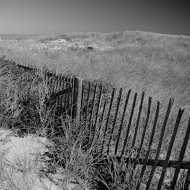 Dunes on the Cape by Martin Stepalavich - Black & White Landscapes (  )