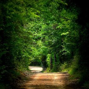 Road Less Traveled by Rhonda Kay - Transportation Roads