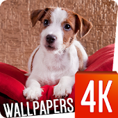 Dog Wallpapers 4k
