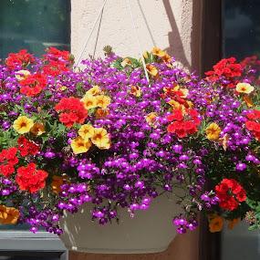 Cornicopia of flowers by Allmen Quester - Flowers Flower Arangements