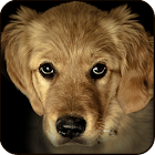 Find a Dog - Hidden Object icon