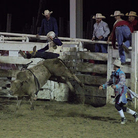 A Short Ride by Monroe Phillips - Sports & Fitness Rodeo/Bull Riding