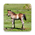 Adorable Horse Foal Wallpapers icon