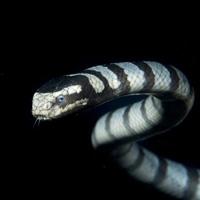 Scuba Snake di Andrea Izzotti
