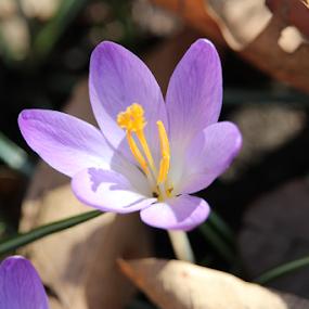 Spring Flower by Wesley Nesbitt - Flowers Flower Gardens