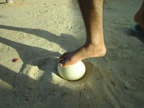 Photo: Тунис 2008, яйцо страуса
