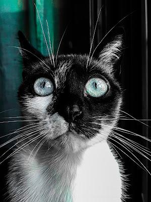 Amelia la gatta che ammalia di Th3_Gh3d0