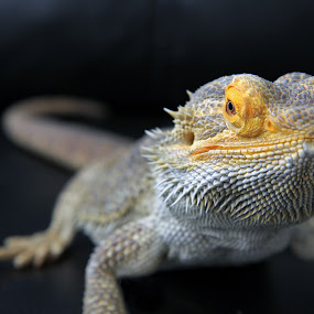 by Ron Harper - Animals Reptiles