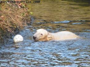 Photo: Knut hat Spass und die ganze Aufregung vergessen :-)