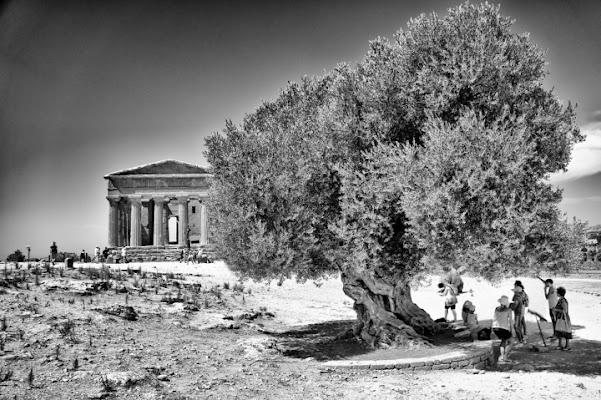 Un olivo di bondell