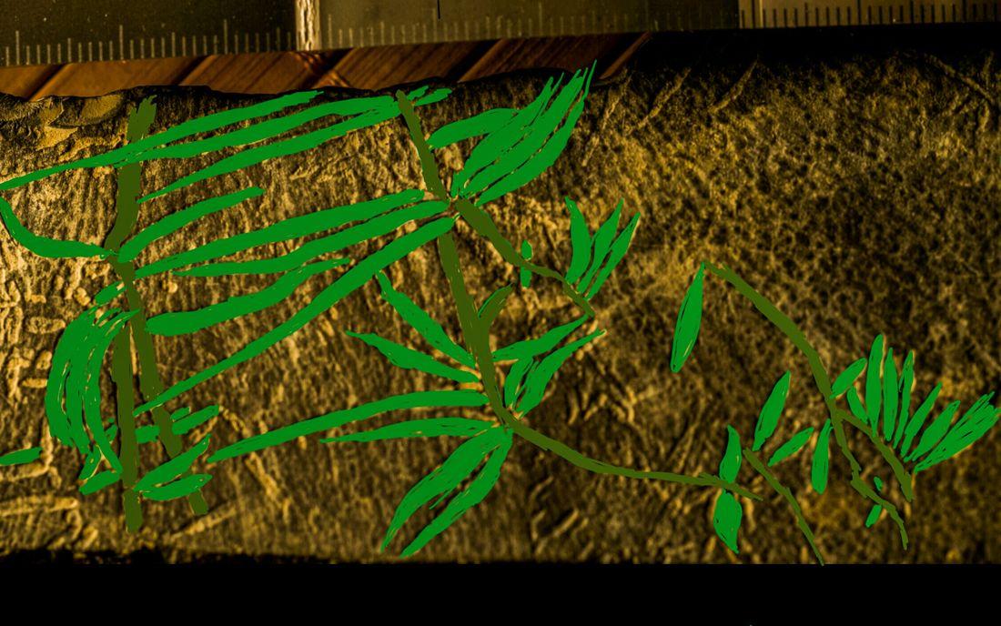 Empreintes de feuilles sur/ dans marnes Valanginiennes 7R2sJYtMLObkqE8WAg5c_EKPGZQRkAkgV48q1OfllXcp651xPmzR1OZJVJQm-r2wyMe1dnP64vBavg=w1920-h1080-no