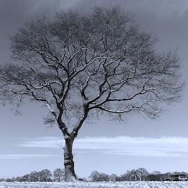 B&W tree by Gert de Vos - Uncategorized All Uncategorized