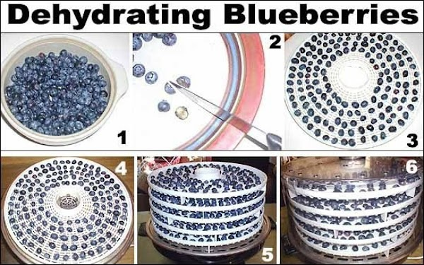 1. Start with fresh, high quality blueberries. Hand wash them with water in a...