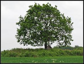 Photo: 28. maj 2011 - Månedens træ