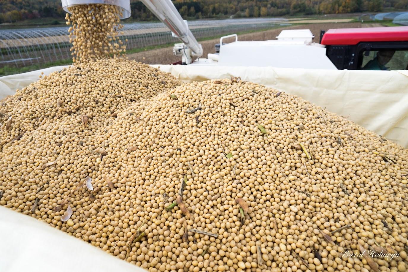 フレコンに積み込まれる大豆