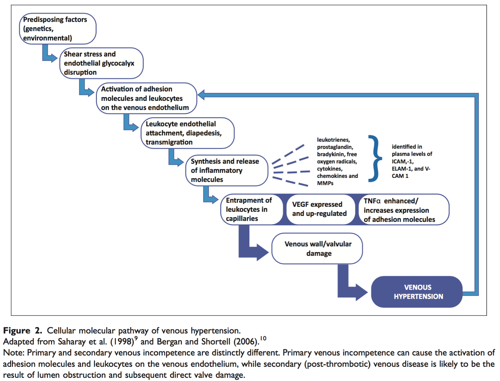 Cellular Molecular pathology of venous hypertension