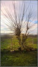 Photo: Str. Abatorului, copac supravietuitor  - 2017.12.11