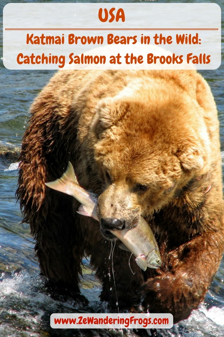 #USA #Katmai #NationalPark - Watching the wild Brown #Bears of #BrooksFalls fishing salmons // #AdventureTravel by Ze Wandering Frogs