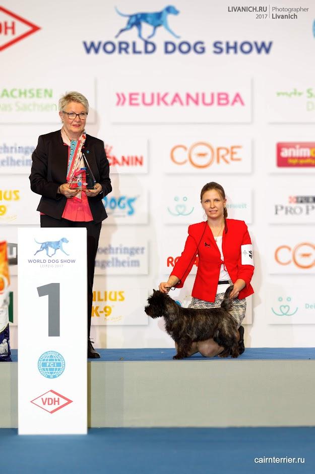 Фото щенка керн терьера питомника Еливс на первом месте с хендлером и экспертом