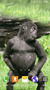 Legrační Opice Živé Tapety - náhled