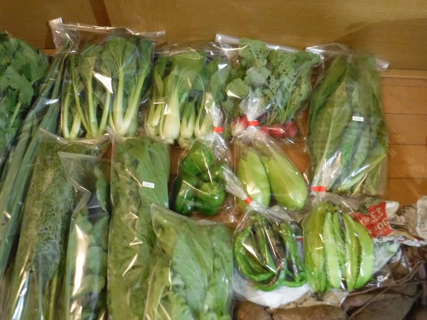 タアサイ 200g チンゲン菜 200g ラディッシュ 1袋 小松菜 150g ピーマン 緑ナス 万願寺唐辛子 四角豆