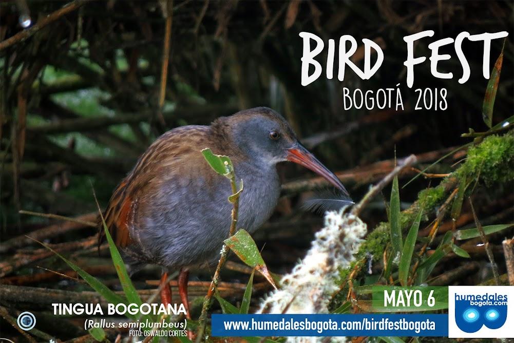 BIRD FEST 2018