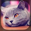 Cute Cats icon