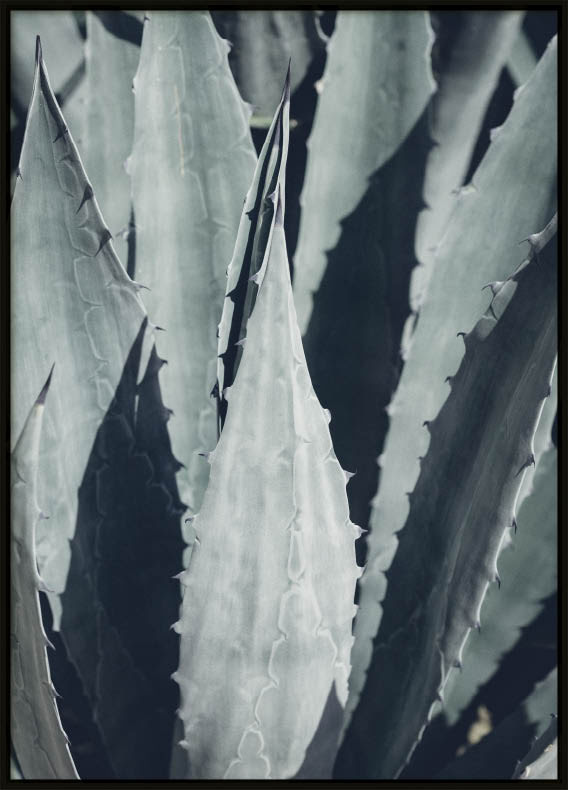Poster, Green Cactus #1