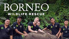 Borneo Wildlife Rescue thumbnail