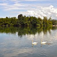 Il lago dei Cigni di