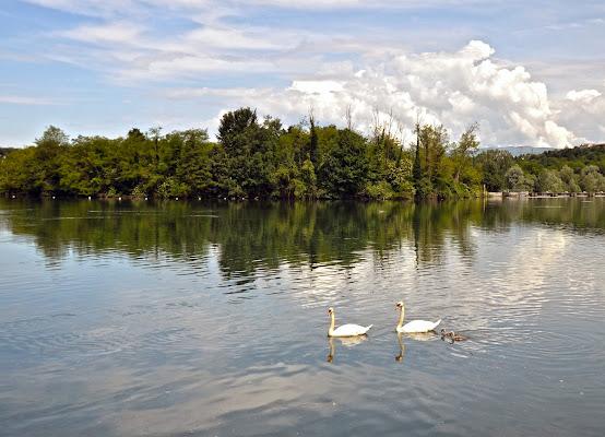 Il lago dei Cigni di Migliu