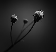 Photo: goodnight all, have a peaceful night :)  #floralfriday by +Tamara Pruessner +FloralFriday  #bwphotography #flowerphotography