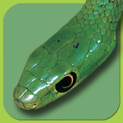 Snakes of Southern Africa Lite